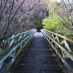 """""""Spring Bridge"""" by layceehince"""