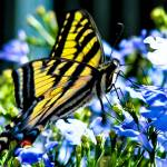 """""""Butterfly"""" by Johnsimages"""