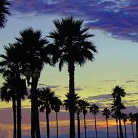 Sunset Palms 3