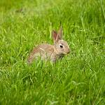 """""""English bunny"""" by DPWphotography"""