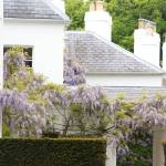 """""""Wisteria"""" by DPWphotography"""
