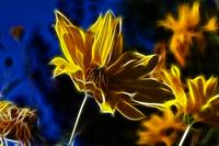 Plasma like flower fractalius