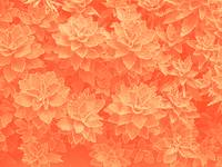 Succulant Pattern in Orange