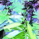 """Phlox Foliage Abstract"" by MaryDolan"