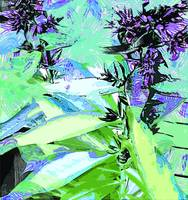 Phlox Foliage Abstract