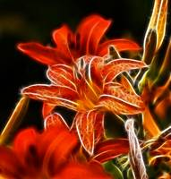 Lily fractalius