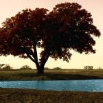 """Lone Tree 2009 x8000"" by martinographics"
