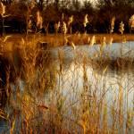 """""""Horseshoe lake"""" by Gmlphotos"""