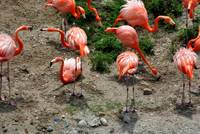 Flamingos, an ariel view