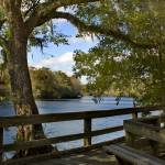 """Suwannee River Boardwalk"" by staceylynnpayne"