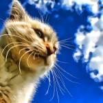 """""""blue cat copy"""" by kathytarochione"""