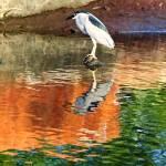 """""""bird copy"""" by kathytarochione"""