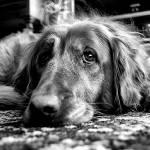 """""""bw dog"""" by kathytarochione"""
