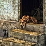 """""""dog on steps"""" by kathytarochione"""