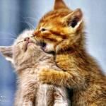 """""""kitty333 copy"""" by kathytarochione"""