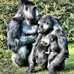 """ape family"" by kathytarochione"