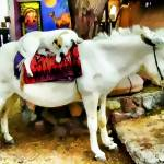 """""""dog and pony"""" by kathytarochione"""