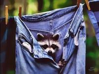 racoon good_photomizer copy