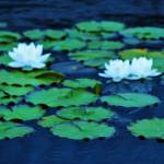 """Monets Garden"" by gailcorrow"