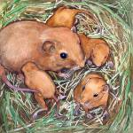 """""""Nest of Mice"""" by lindalou2"""