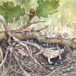 """leopard lizards"" by lindalou2"
