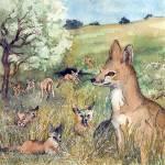 """San Joaquin Kit Fox"" by lindalou2"