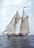 Schooner Alcyone sails by Bill McAllen