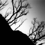 """Dark Trees and Hill"" by BrendanArthurRing"