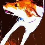 """""""Dog Days"""" by bztat"""