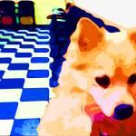 """""""Pomeranian Shenannigans"""" by bztat"""