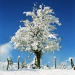 """""""white tree"""" by VivianGerogianni"""