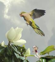 Parrot and Magnolia Tree
