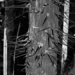 """""""Spiny tree"""" by AnneHarai"""