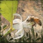 """Bee and Praying Mantis"" by naturespaintbox"