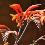 """""""DSC_0004a iris"""" by brasscutter"""