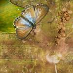 """Butterfly and Seed Pods"" by naturespaintbox"
