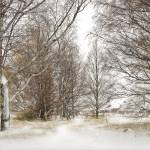 """""""Trees in Snow Storm"""" by ChrisWhitePhotography"""