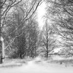"""Trees in Snow Storm - B&W"" by ChrisWhitePhotography"