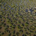 """Mangroves in the Florida Everglades"" by Degginger"