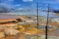 Mammoth Hot Springs II