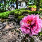 """Blossom"" by 4colourprogress"