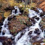 """Woodland Cascade"" by Degginger"