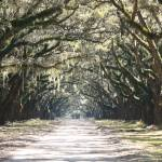 """Live Oaks Lane with Gate"" by Groecar"