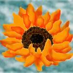 """sunflower 2"" by jwilliamd"