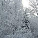 """""""Winter"""" by CarmenL"""