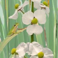 Bog & Frog by I.M. Spadecaller