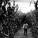 """LOST IN THE MAIZE"" by wbsloan"