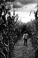 LOST IN THE MAIZE