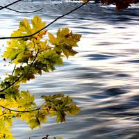 Leaves by the River