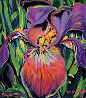 Purple Iris by RD Riccoboni